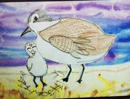 Martin Luther King Elementary School students Chelsea Robles and Brendan Garcia drew this cute plover chick.
