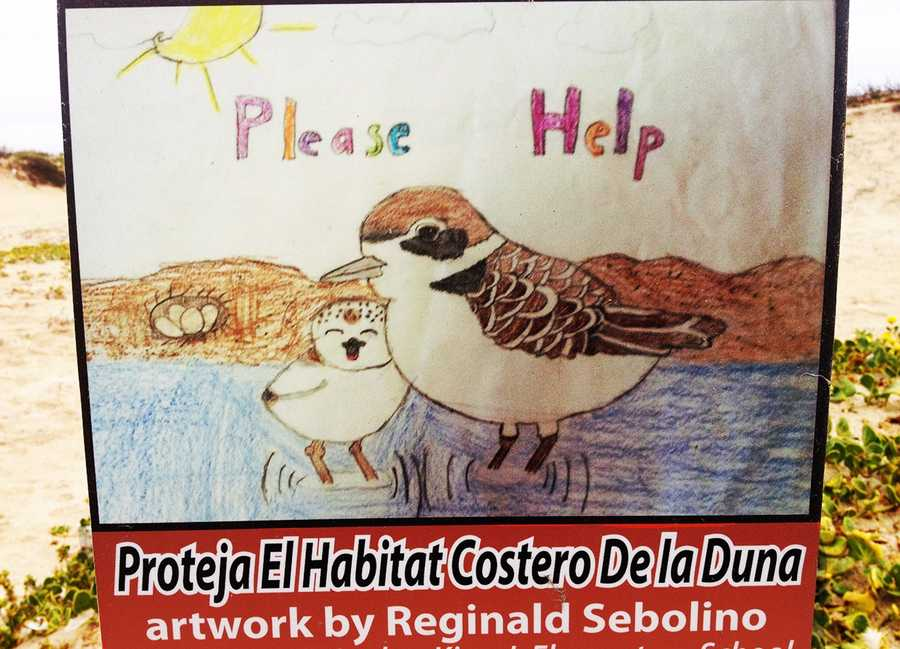 Reginald Sebolino, a student at Martin Luther King Elementary School, did this drawing of snowy plovers to mark dunes at Seaside Beach where fragile nesting habitats are.