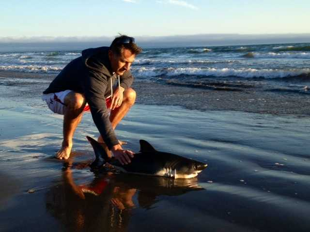 Rick Galvan and his wife were jogging along La Selva Beach when they came upon a nearly two-foot-long shark in the surf.