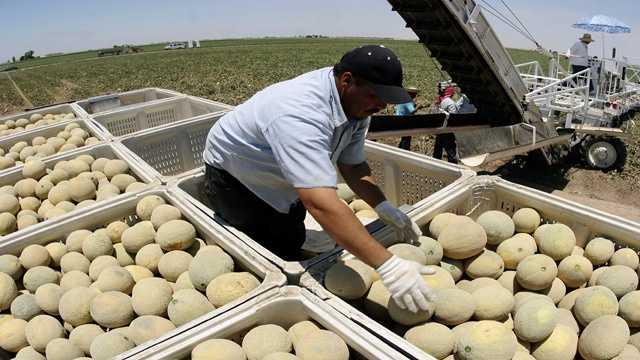 farm worker.jpg
