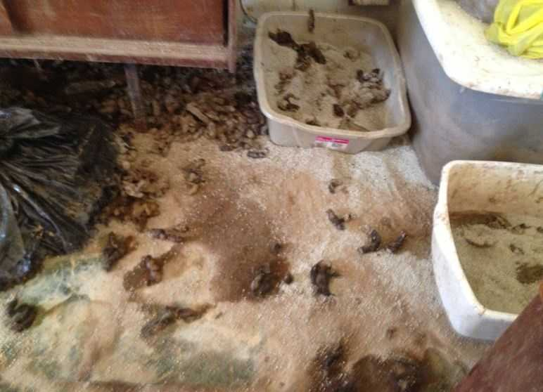 The house where the cats were kept is covered in feces, the SPCA said. The odor of urine was so strong that it was detectable from outside the house.