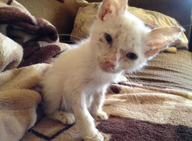 On Thursday, the SPCA for Monterey County executed a warrant and rescued more than 30 cats and kittens from a house on 6th Street in Greenfield.