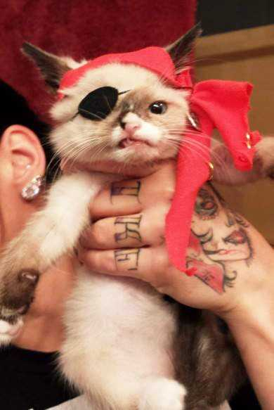 The 6-week-old kitten's stardom happened when a photo of Sir Stuffington dressed up as a pirate went viral.