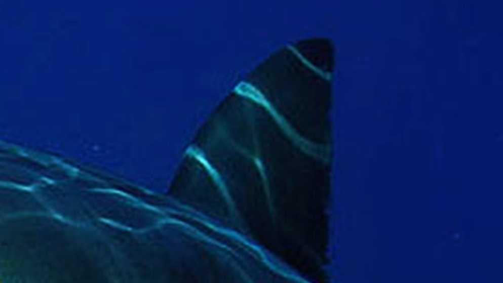 shark attack sc.jpg