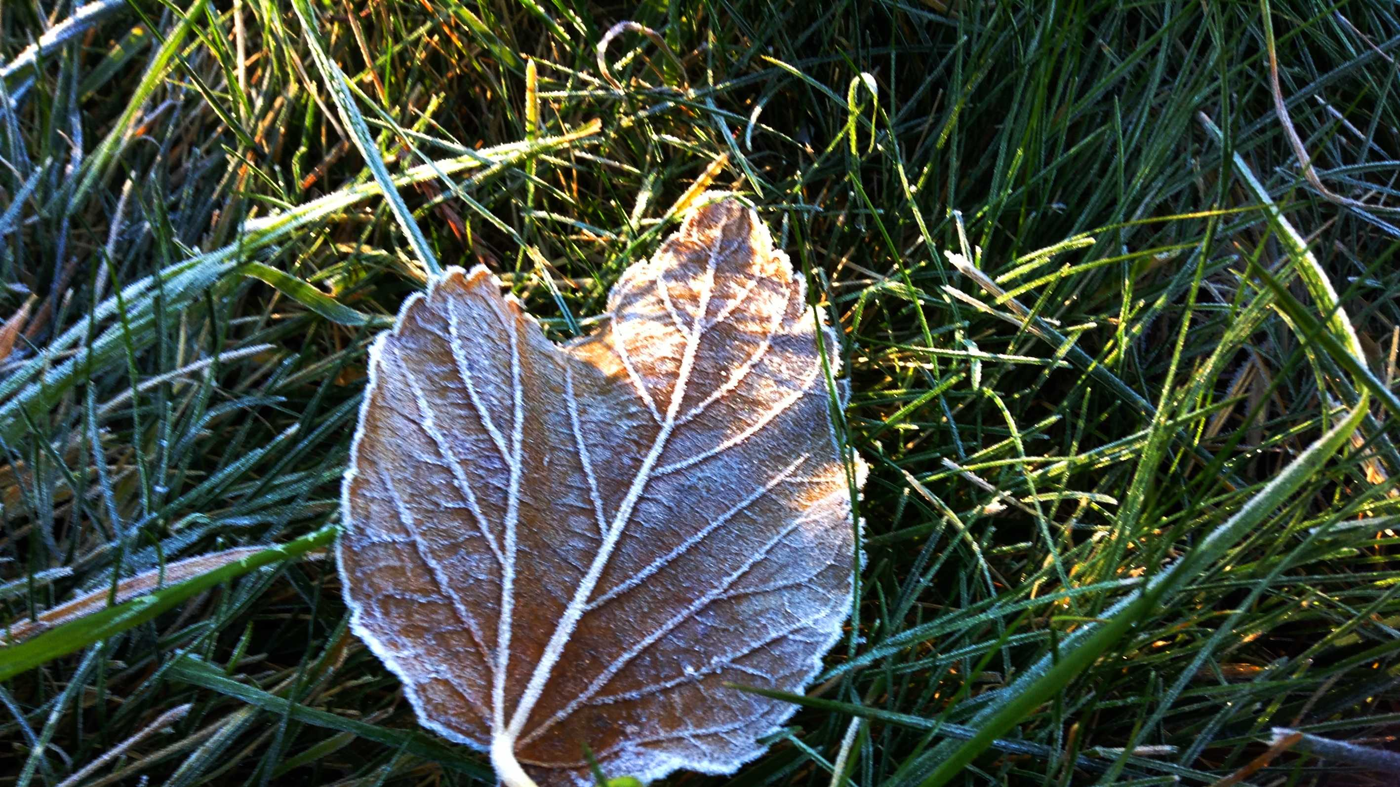 Frost in Watsonville. (Dec. 6, 2013)