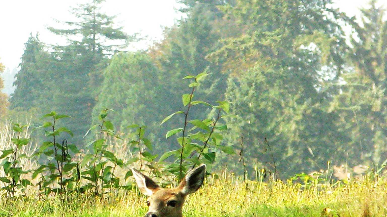 deer cute.jpg