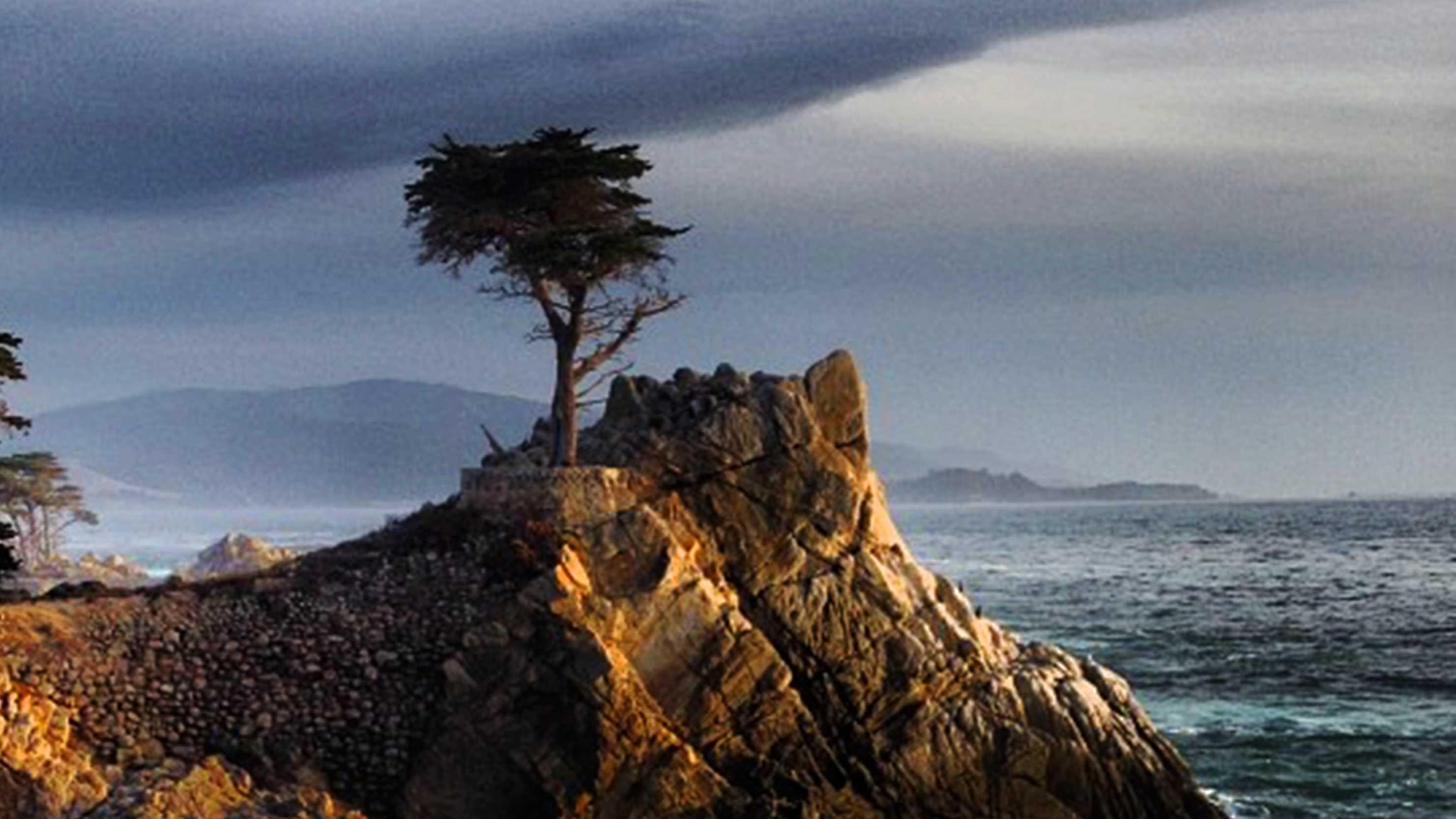 The Lone Cyprus in Pebble Beach is near Ghost Tree. / Photo by Bart Keagy /