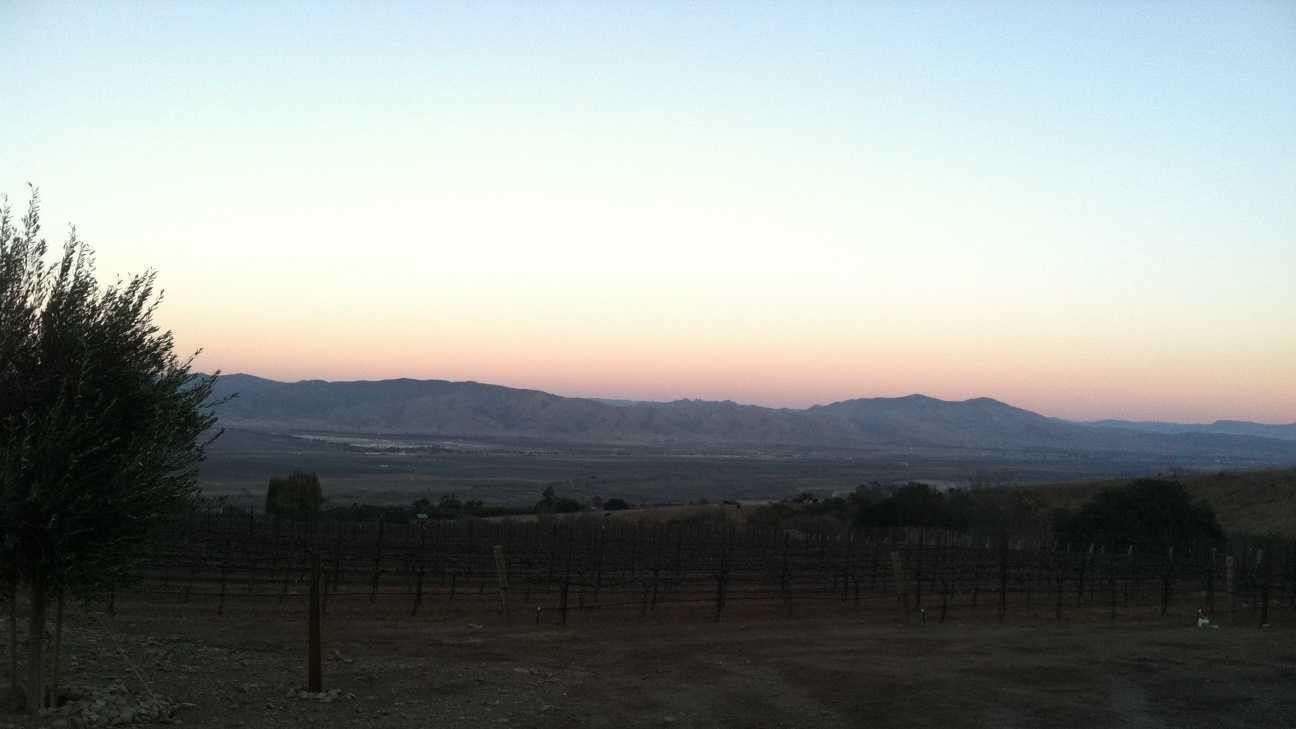 Salinas Valley vineyards