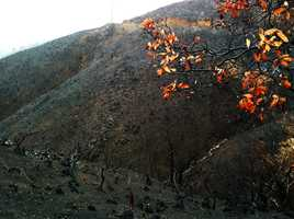 This is what Pfeiffer Ridge looked like on Feb. 28, 2014 after a wildfire scorched 900 acres in December 2013. The National Weather Service warned there could be landslides during heavy rain.