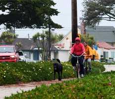 A dog is still happy to go on a walk despite Friday's rain along West Cliff Drive in Santa Cruz.