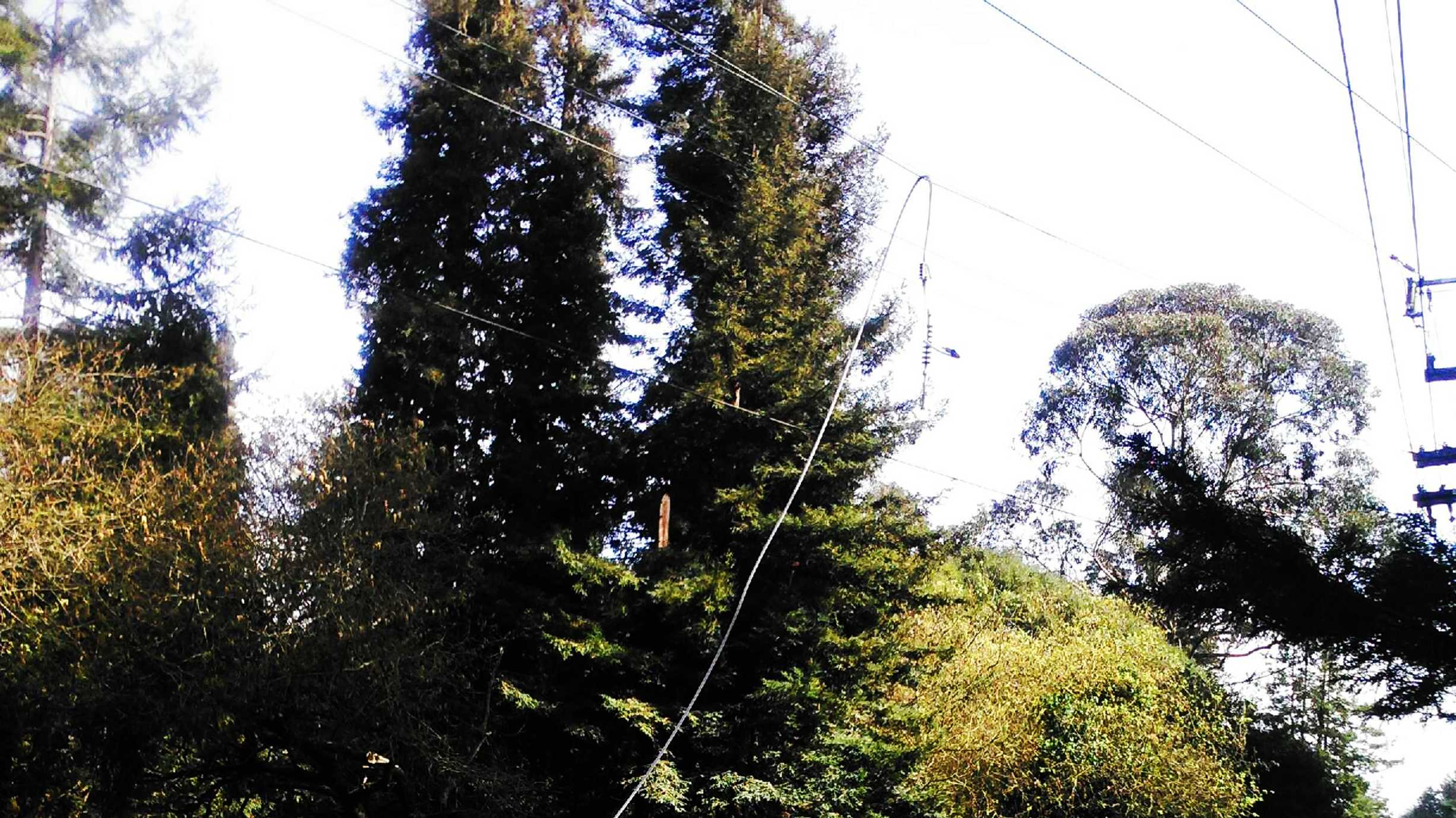 Powerlines were ripped down by a tree in Aptos. (March 7, 2014)