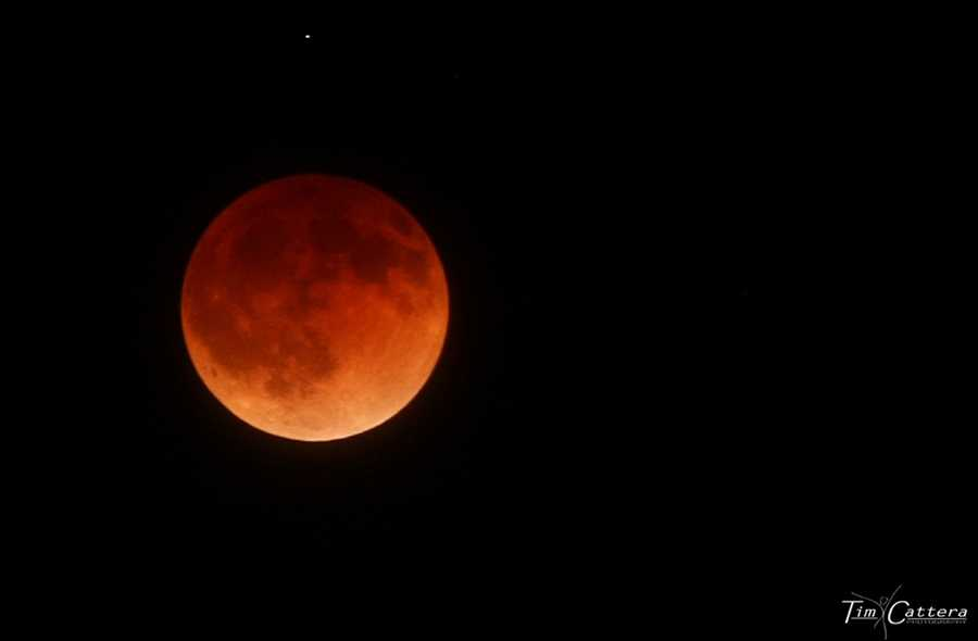 Tim Cattera drove up into the Santa Cruz mountains to get above fog that hung over much of the Central Coast and shot these beautiful blood moon photos.