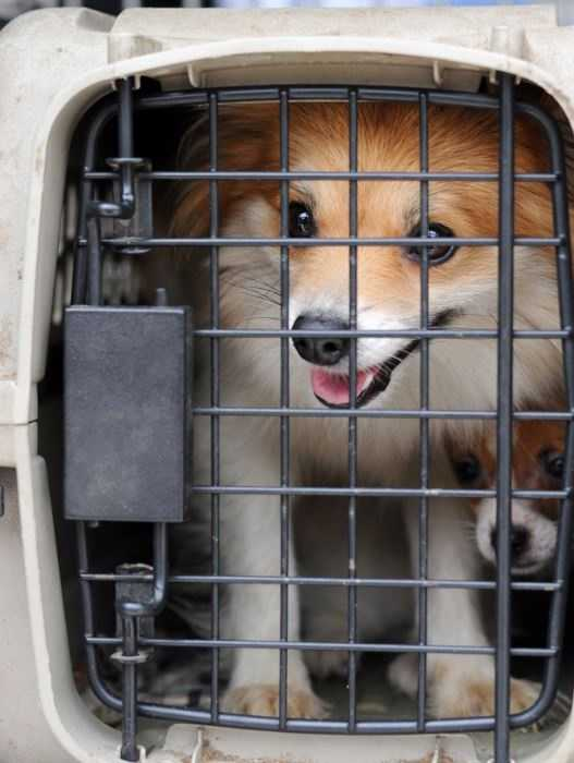 The Monterey County office of the Society for the Prevention of Cruelty to Animals rescued 14 dogs and puppies from a vehicle Monday.