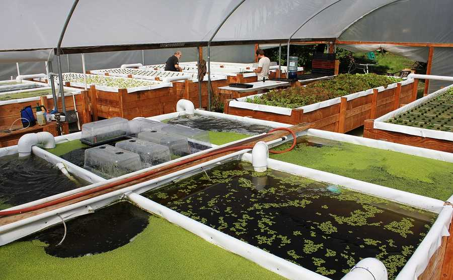 Green Water Garden is a not-for-profit, social enterprise project that is helping the disabled redefine themselves through supported employment.