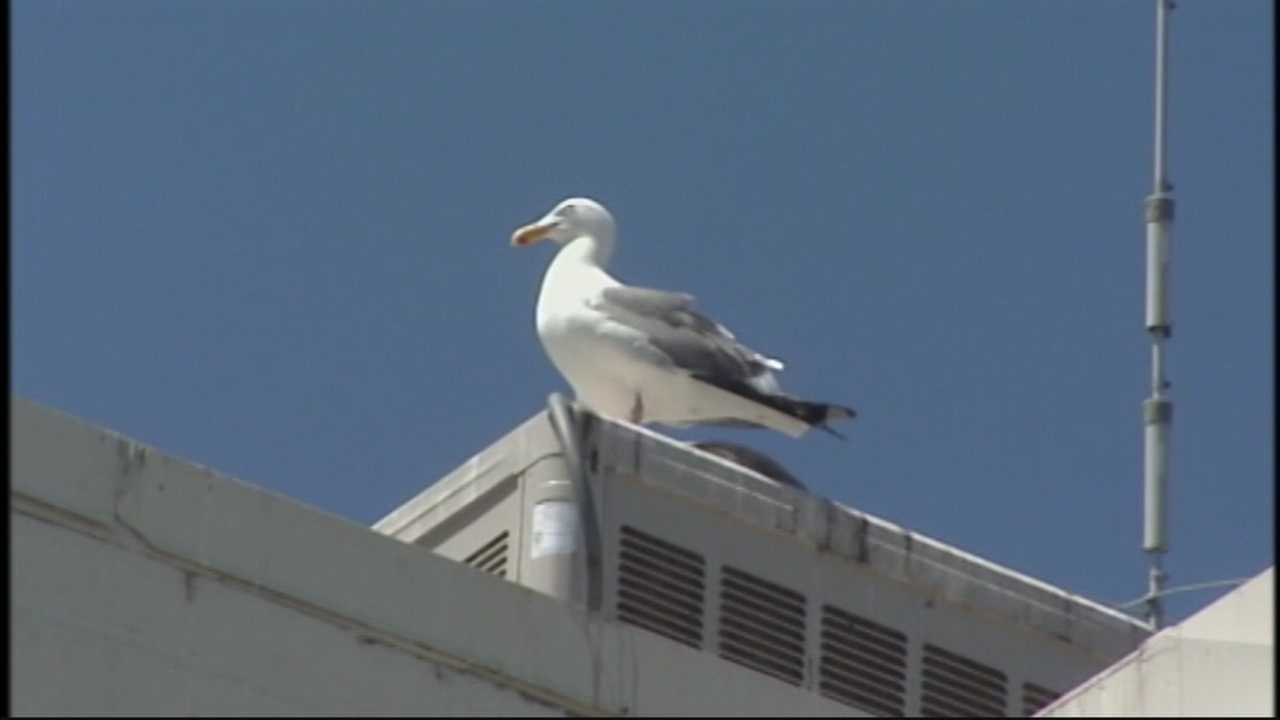 Some Pacific Grove residents said a stench still lingers in their town because of seagulls.