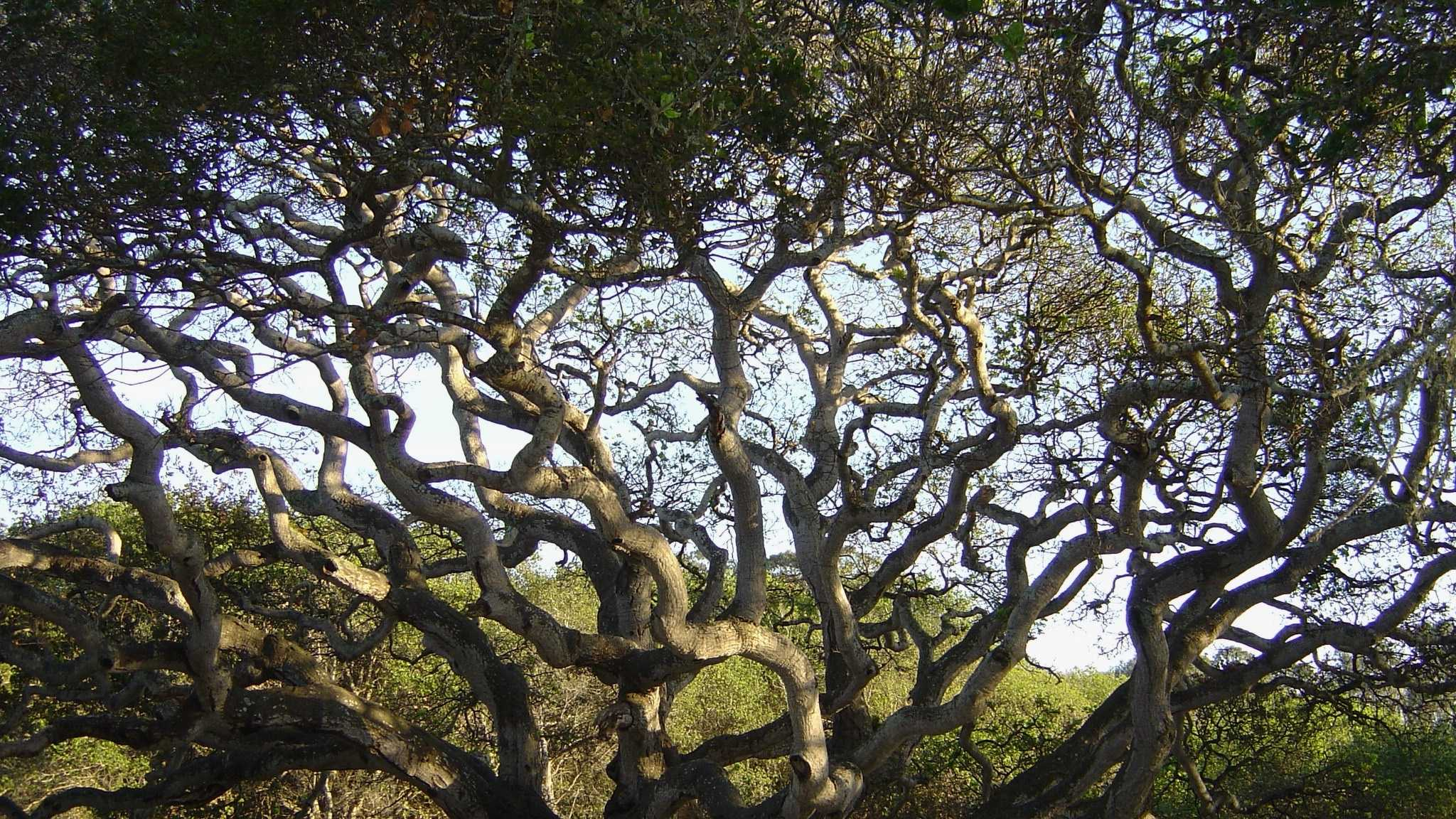 an essay on living on oak road Category: descriptive essays, descriptive, observation title: the haunted house.