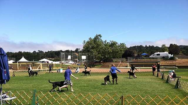 All-breed dog show held at Carmel Middle School