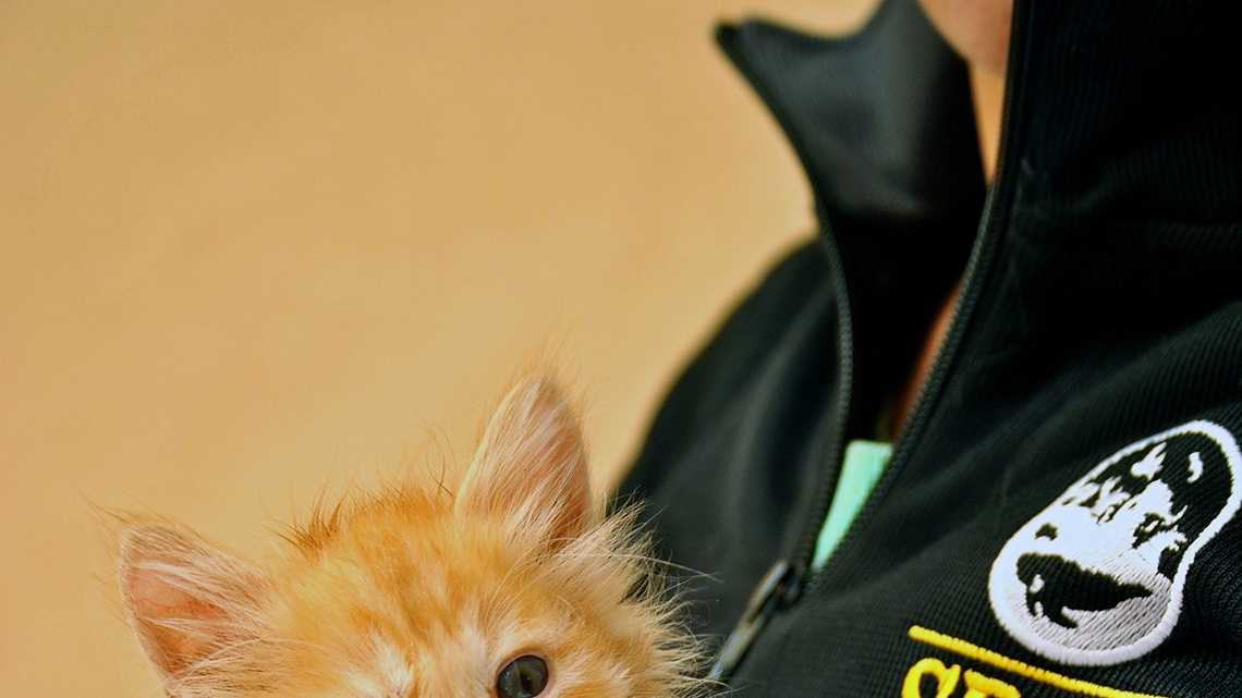 This kitten was rescued from a house in Greenfield.