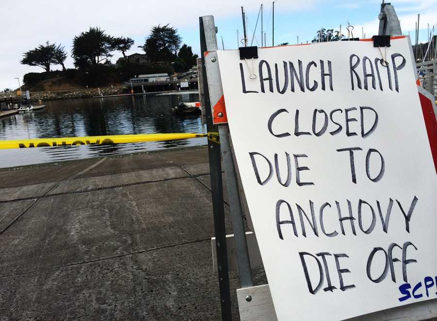 The harbor's boat launch ramp was closed Thursday, but the rest of the harbor remained open.