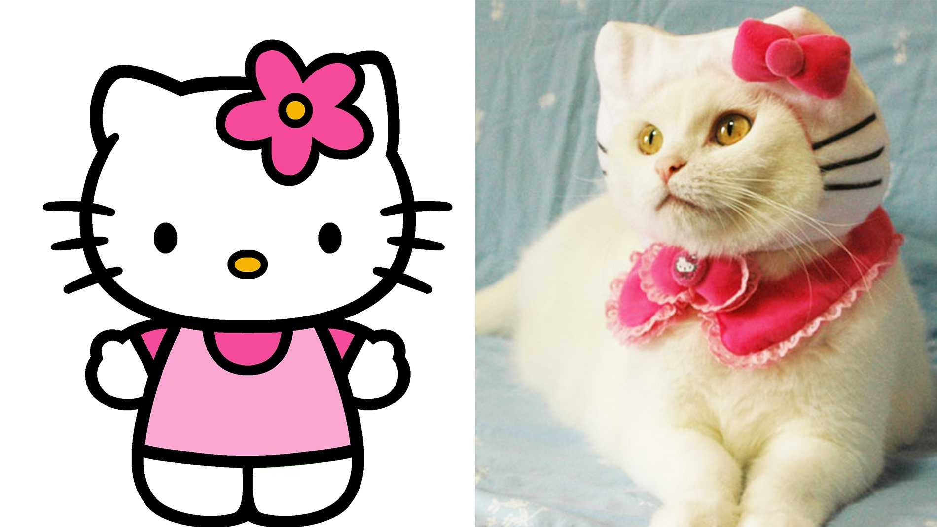 Apparently, Hello Kitty is not a cat.