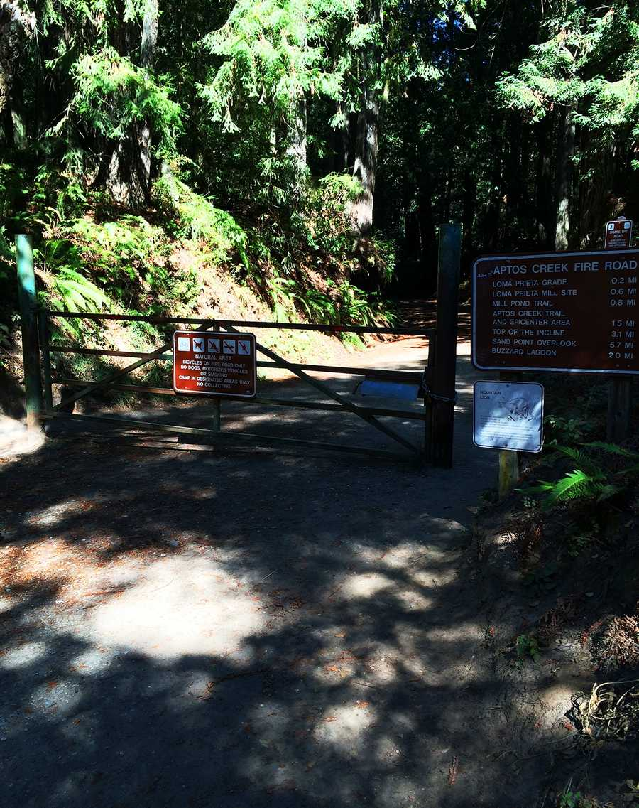 To get to the trail head, drive from the park entrance in Aptos until you find the parking area at this Aptos Creek Fire Road gate.