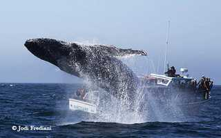 Jodi Frediani / Monterey Bay Whale Watch  (Oct. 13, 2014)