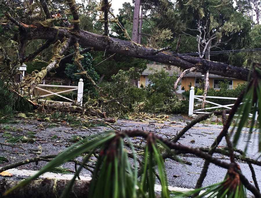 "CalFire issued a ""falling tree hazard"" warning for Pebble Beach and alerted Pebble Beach residents that PG&E would not enter the area until after the storm was over."