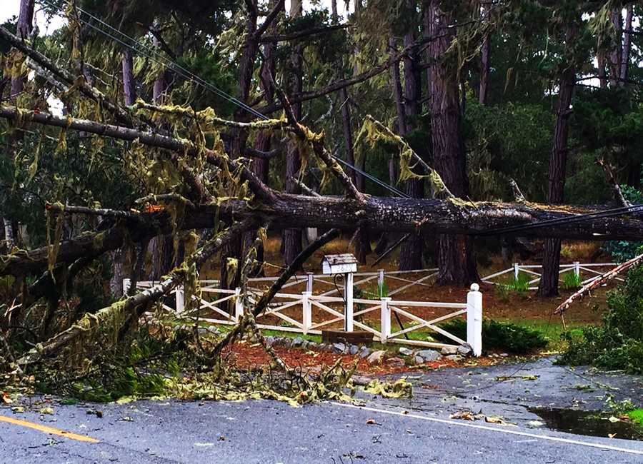 A tree ripped down power lines in this Pacific Grove neighborhood.  Dec. 11.