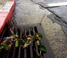 Rainwater gushed into a Salinas storm drain.