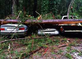 Five cars were crushed by a redwood tree on Sunset Drive in Boulder Creek Thursday morning.Dec. 11.