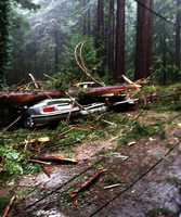 Cars were crushed by a redwood tree on Sunset Drive in Boulder Creek Thursday morning.Dec. 11.