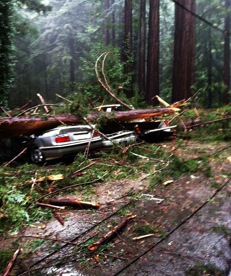 Cars were crushed by a redwood tree on Sunset Drive in Boulder Creek Thursday morning.  Dec. 11.