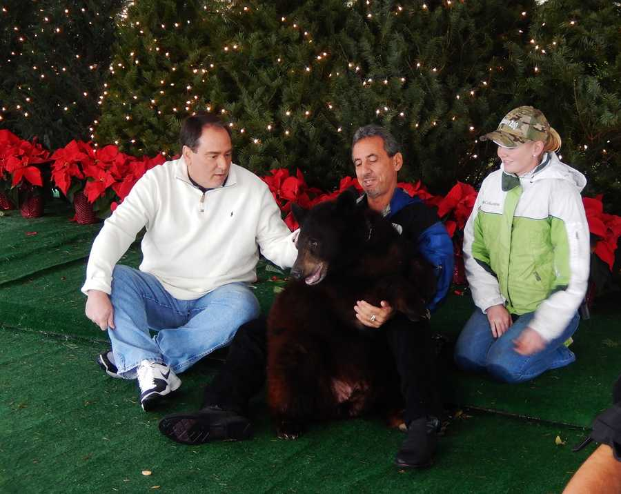 Dan Green hangs out with a black bear from Monterey Zoo.