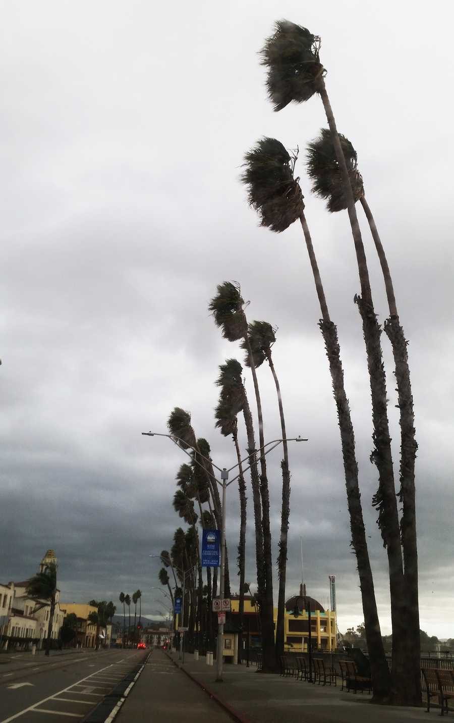 Palm trees at the Santa Cruz Beach Boardwalk were wind-battered.