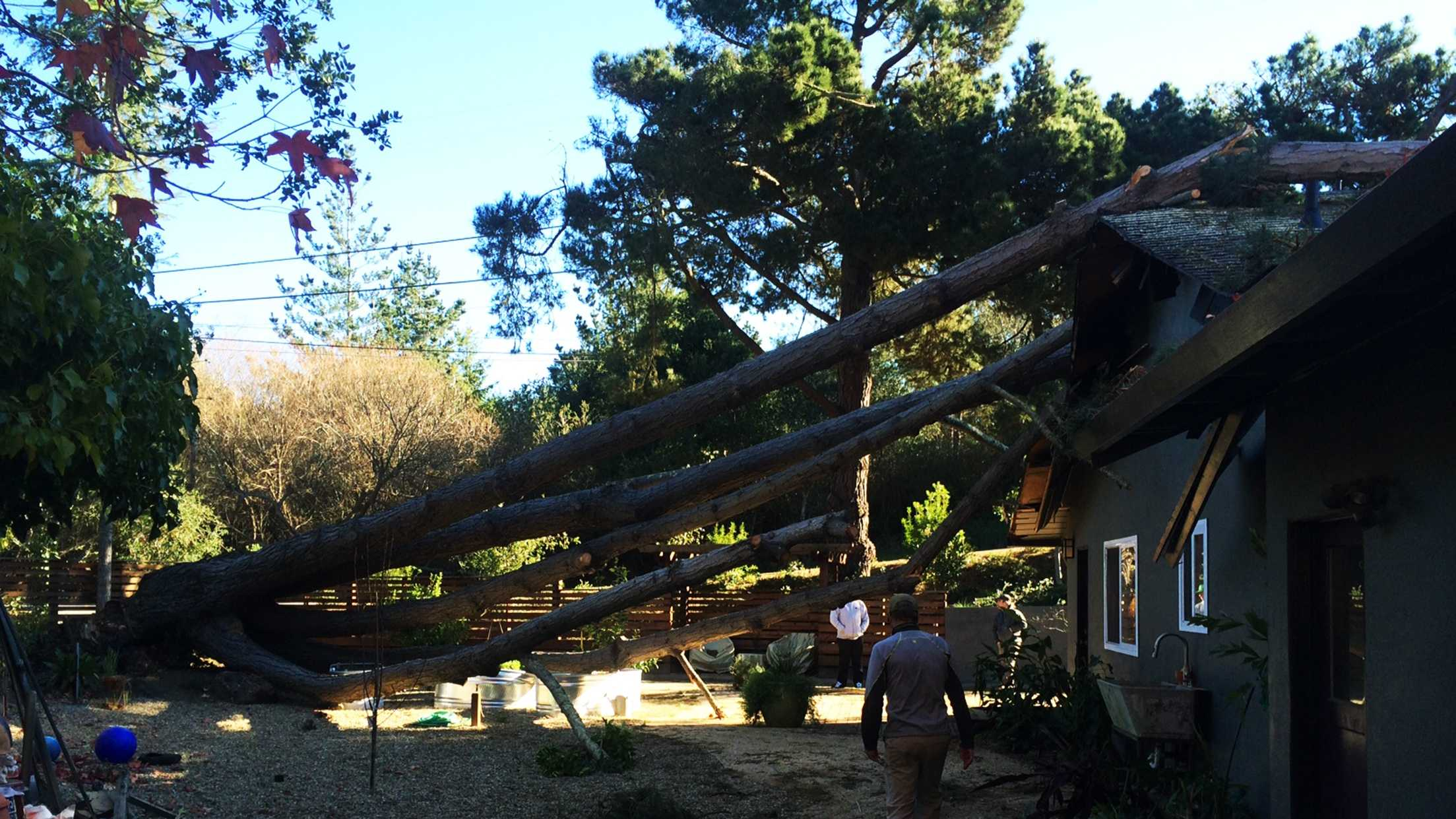 A tree landed on this Aptos house Wednesday morning.