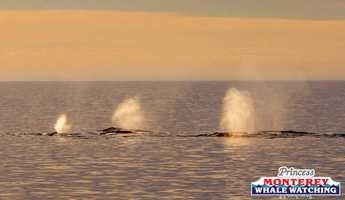 VIDEO: Learn more about gray whales in the Monterey Bay this January here.