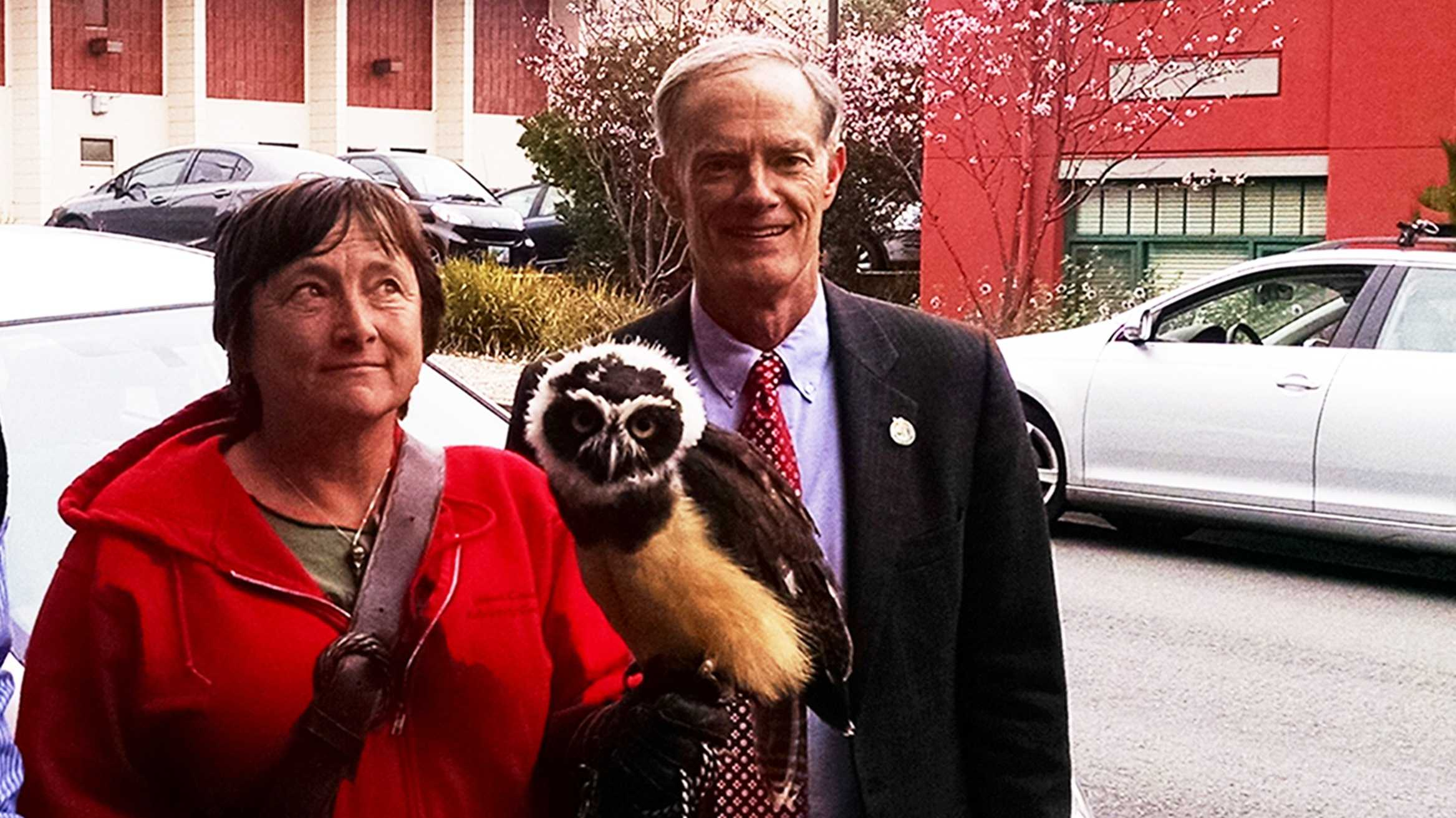 This jungle owl named Owlsley will help tackle Pacific Grove's seagull problem.
