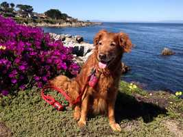 """""""Cindy is a very special dog. She is a therapy dog and likes to bring some love to the elderly."""" 3/2015"""