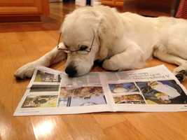 """""""Our dog Nelson keeping up with the latest Salinas news!"""" 1/2015"""