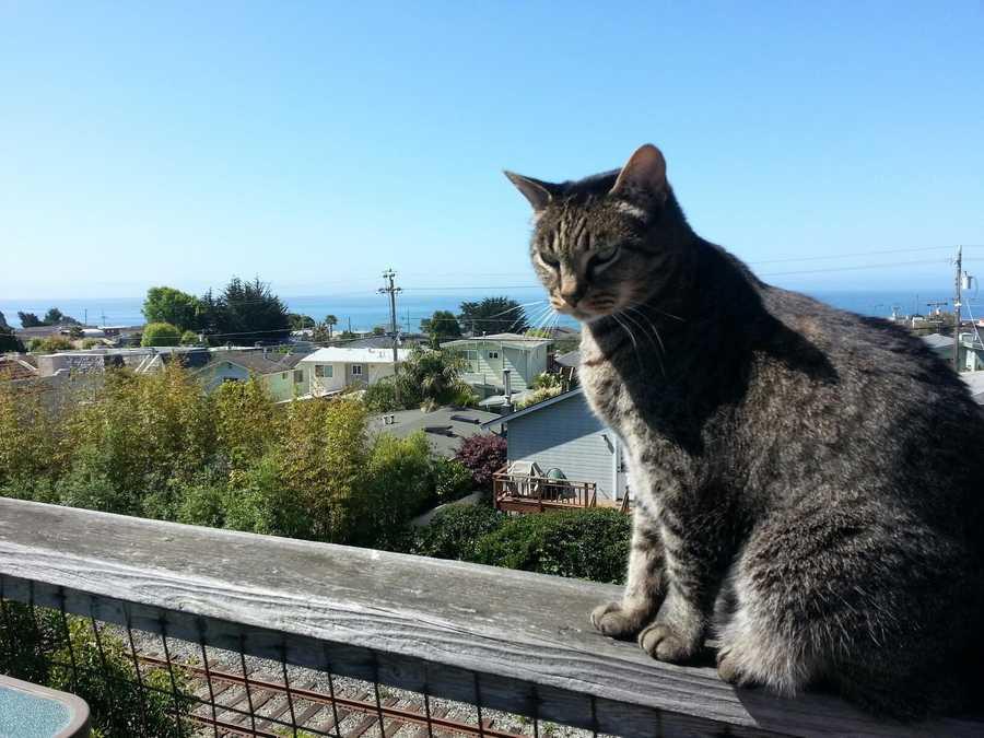 """Bobo, king of his cat-dom, enjoying a fall day."" 12/2014"