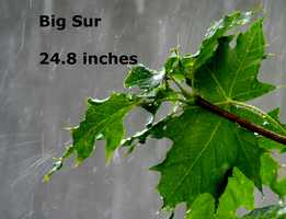 Big Sur :  24.8 inches