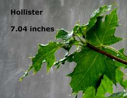 Hollister :  7.04 inches
