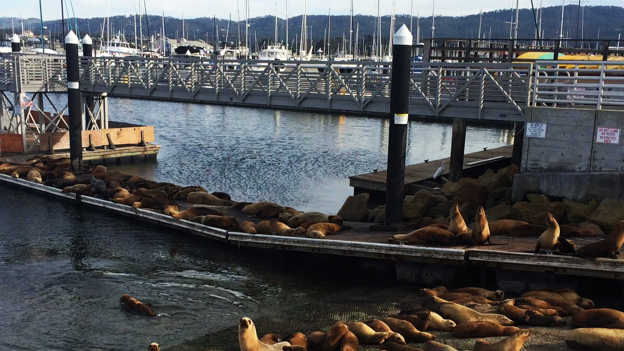 Sea lions hang out in Monterey.