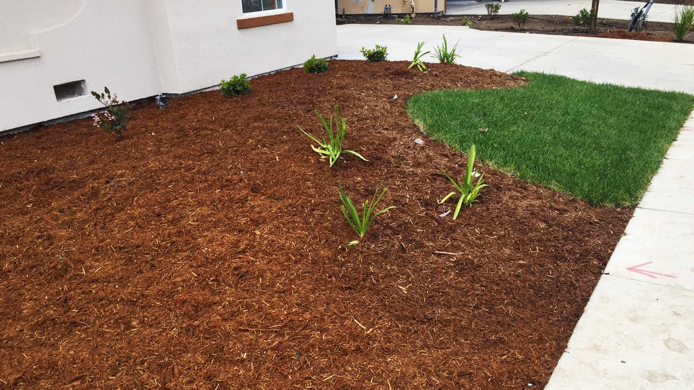 A very little lawn was planted in Salinas.