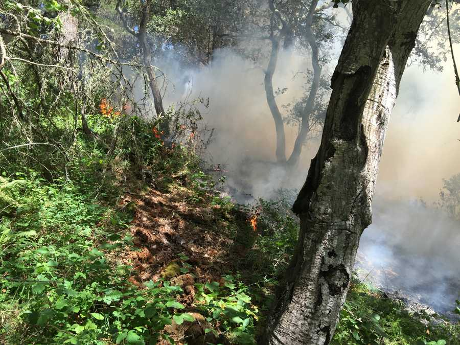 Despite wind gusts, Monterey Deputy Fire Chief Stewart Roth said flames spread slowly thanks to helicopters dropping retardant and 40 firefighters on the ground.