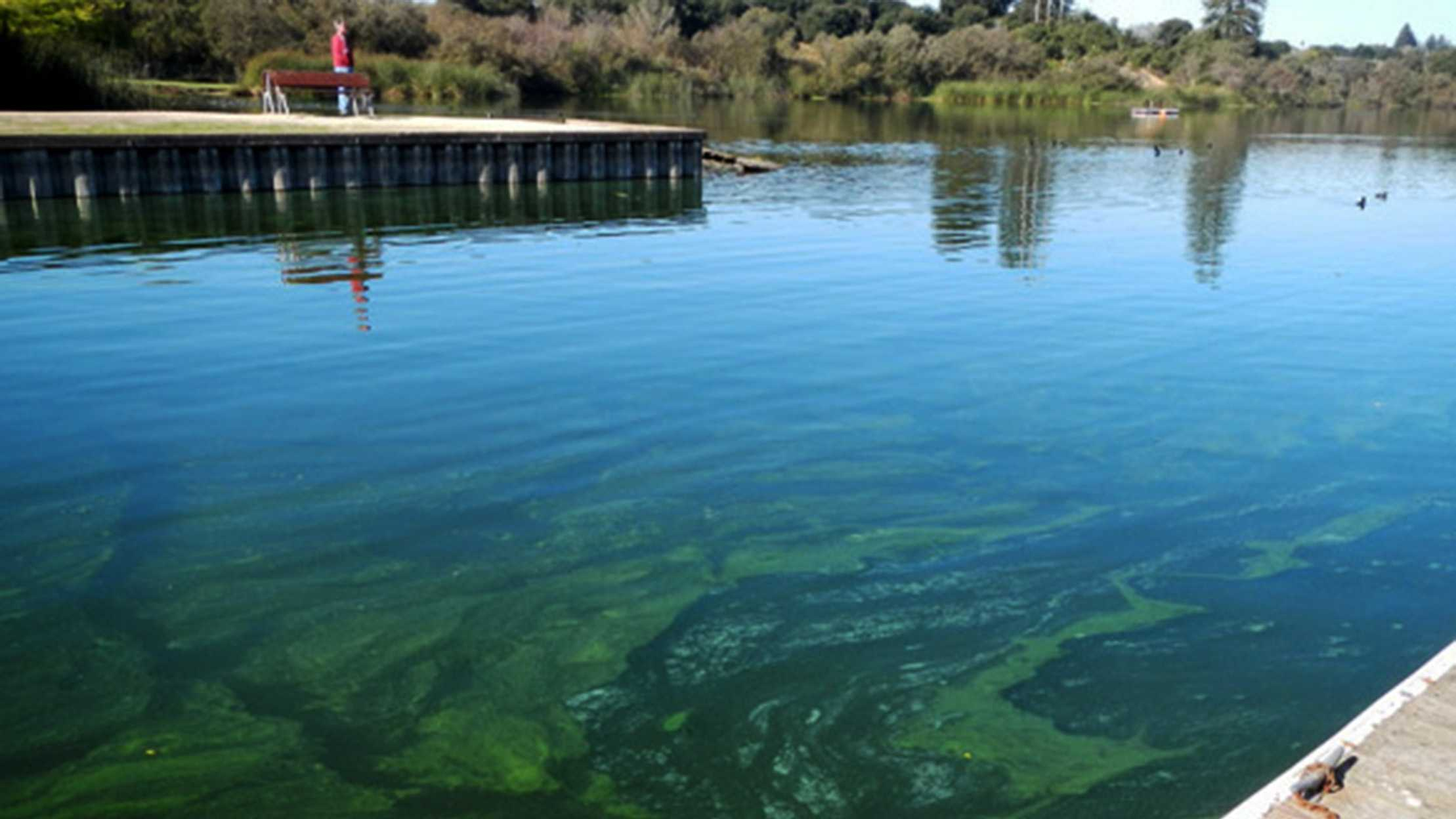 Pinto Lake