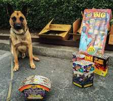 Ari the Santa Cruz County Sheriff's Crime Dog sits next to illegal fireworks. Hefty $1,000 fines were handed out to three people caught igniting fireworks around Santa Cruz on July 4.