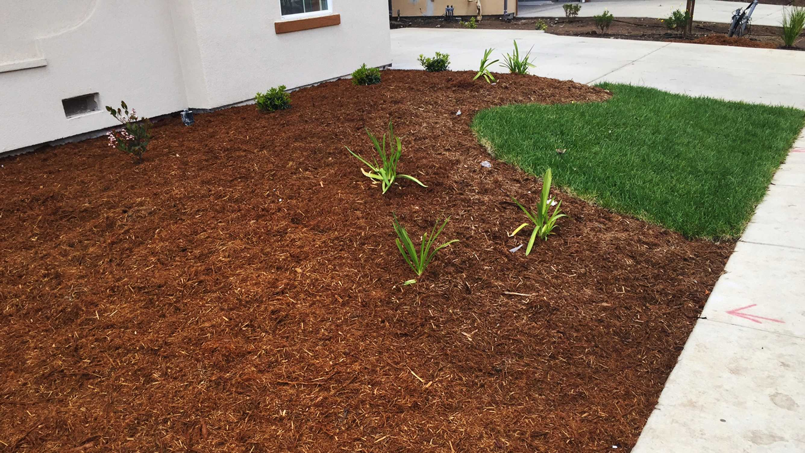 Little lawns are popular during California's drought.