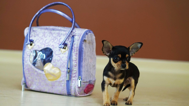 Pierre the puppy