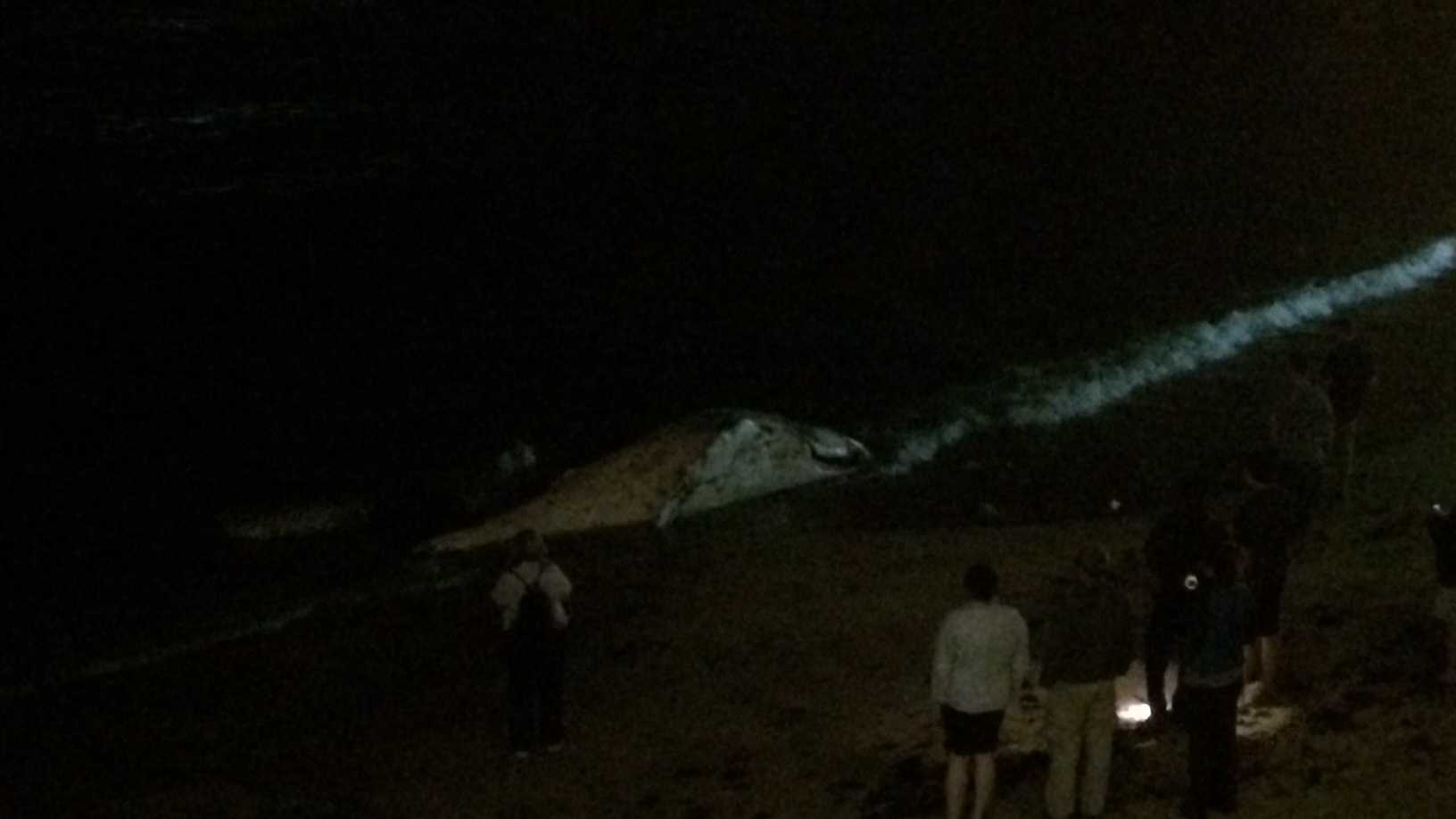 A dead baby whale washed ashore in Monterey Thursday night.